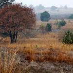 Nederland, Nijverdal, 6 november 2011 Herfst in Nationaal Park De Sallandse Heuvelrug, een natuurgebied tussen Nijverdal en Holten. Nationaal Park De Sallandse Heuvelrug wordt aangewezen als Natura 2000 gebied en is onderdeel van de Ecologische Hoofdstructuur. Het natuurgebied omvat onder andere de Haarlerberg, de Holterberg en de Noetselerberg. The Netherlands, Nijverdal, november 6, 2011 Autumn in Nationaal Park Sallandse Heuvelrug. Foto: Sijmen Hendriks