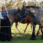 1-paarden